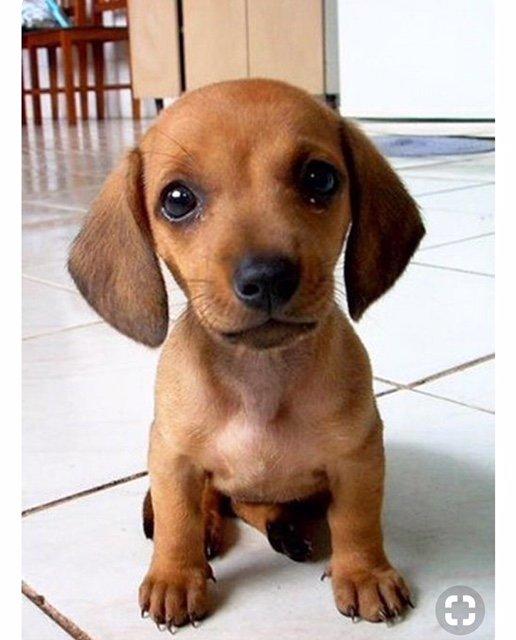 Dog Pic 27