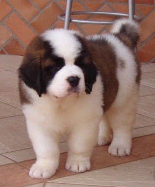 Dog Pic 8